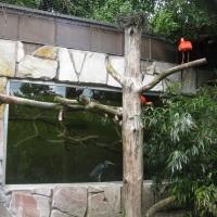 2009-06-12_-_Augsburger_Zoo-0003