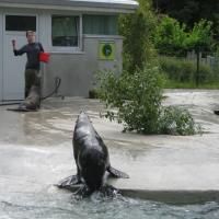 2009-06-12_-_Augsburger_Zoo-0005