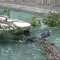 2009-06-12_-_Augsburger_Zoo-0007