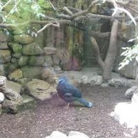 2009-06-12_-_Augsburger_Zoo-0012