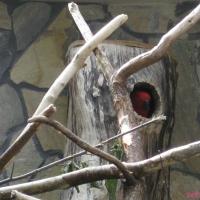 2009-06-12_-_Augsburger_Zoo-0014