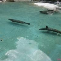 2009-06-12_-_Augsburger_Zoo-0017
