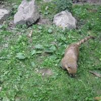 2009-06-12_-_Augsburger_Zoo-0019