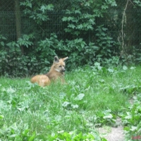 2009-06-12_-_Augsburger_Zoo-0023