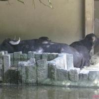 2009-06-12_-_Augsburger_Zoo-0024