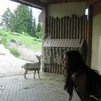2009-06-12_-_Augsburger_Zoo-0026
