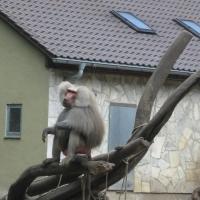 2009-06-12_-_Augsburger_Zoo-0027