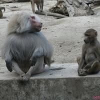 2009-06-12_-_Augsburger_Zoo-0031