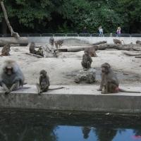 2009-06-12_-_Augsburger_Zoo-0032