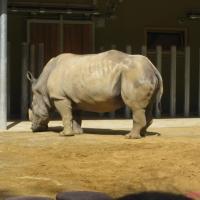 2009-06-12_-_Augsburger_Zoo-0041