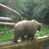 2009-06-12_-_Augsburger_Zoo-0044